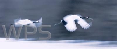 Whitchurch Photographic Society: 1 &emdash;